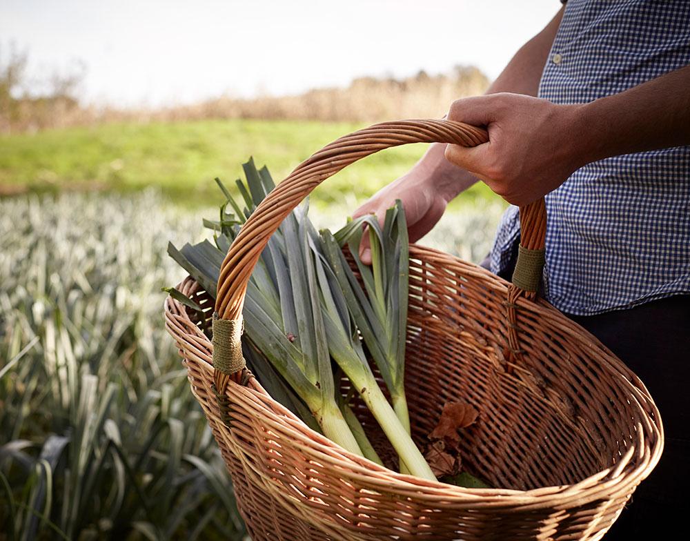 Forge-Adour-collecte-legumes
